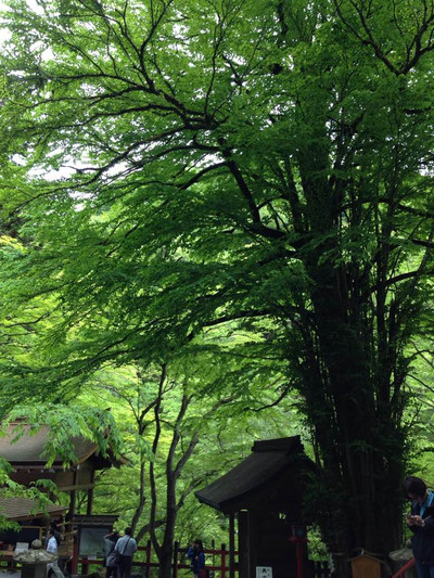 Kifune07
