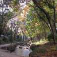 秋の小松川親水公園