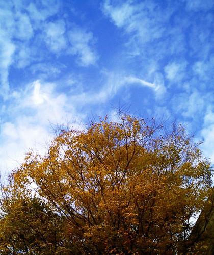 江戸川文化センター脇のケヤキと空