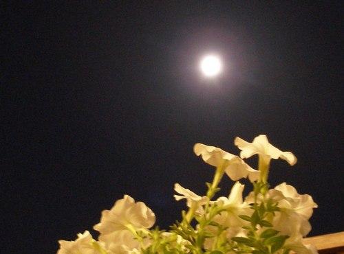 中秋の名月(2007.9.25)