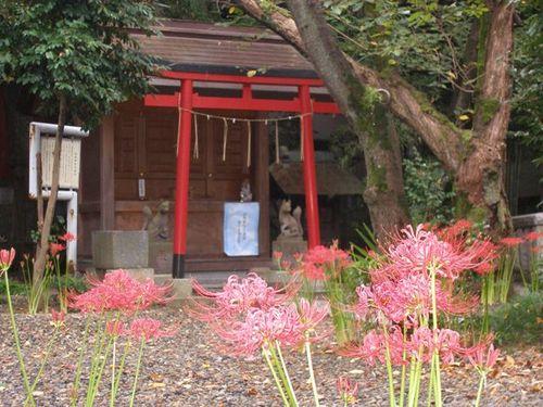 香取神社の彼岸花