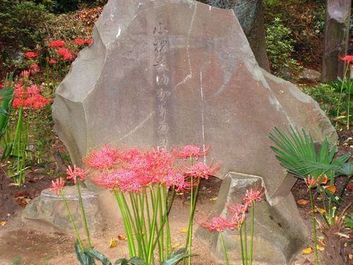 香取神社の彼岸花2
