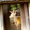 新小岩厄除香取神社の神鹿1