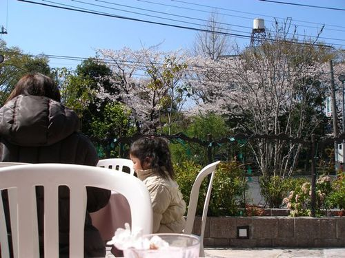 イタリアンレストラン「レプロット」3 テラスから見える桜