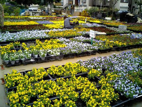 お花屋さんの喜楽園2
