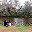 オーククリーク・リバーで鴨と遊ぶ親子