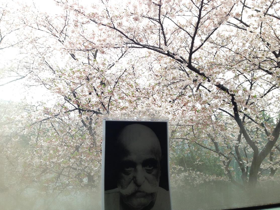 Sakura20170411
